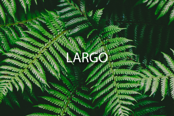 Neighborhood Guide for Largo