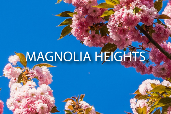 Magnolia Heights St Petersburg Neighborhood guide