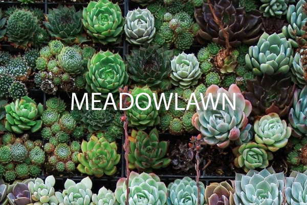 Neighborhood Guide for Meadowlawn