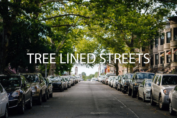 tree-lined-streets